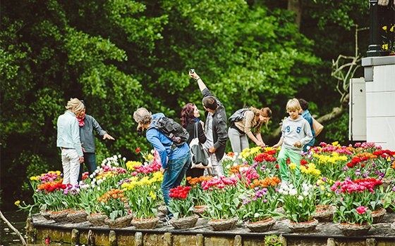42014_fullimage_tulip island picking tulips _560x350