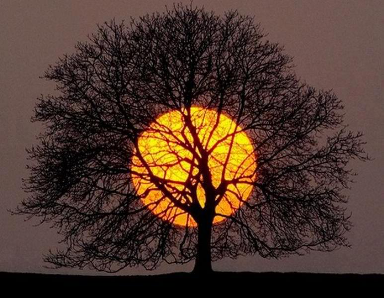 _Full-Moon-Tree-with-Leaves