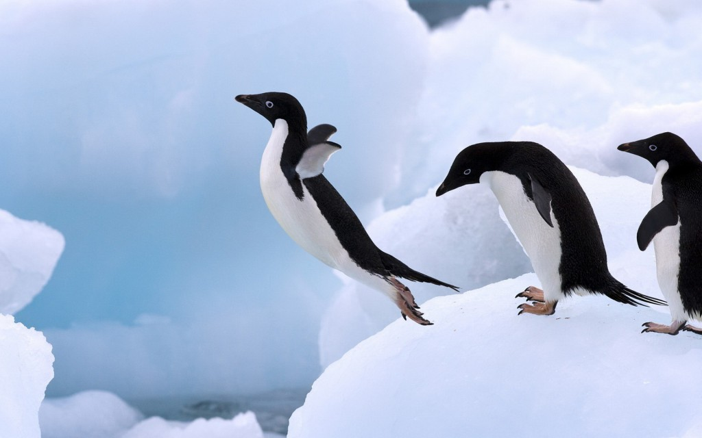 Animals_Birds_Penguin_jump_031240_